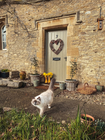 image of cat outside stone built country cottage front door