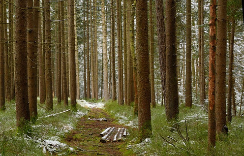 Timber Wood Forest Image
