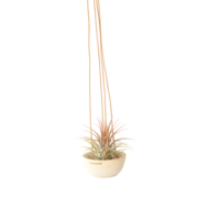 Wood + Leather Air Plant Hanger