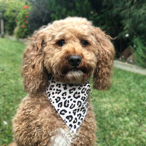 Leopard Print Tie On Dog Bandana