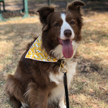 Load image into Gallery viewer, Mustard Doggo's Slide On Dog Bandana