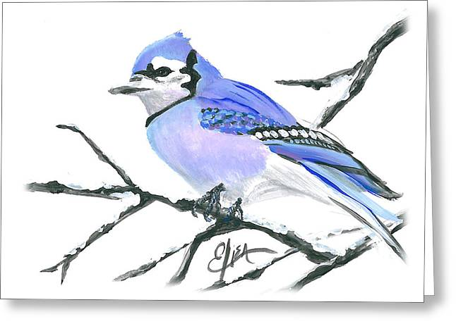 Blue Jay - Greeting Card