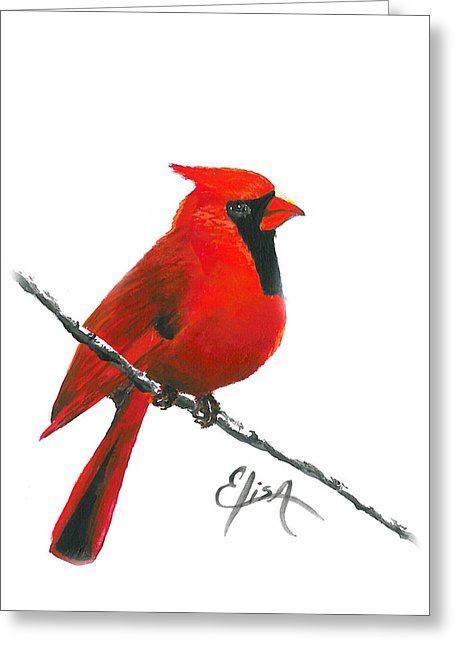 Cardinal - Greeting Card