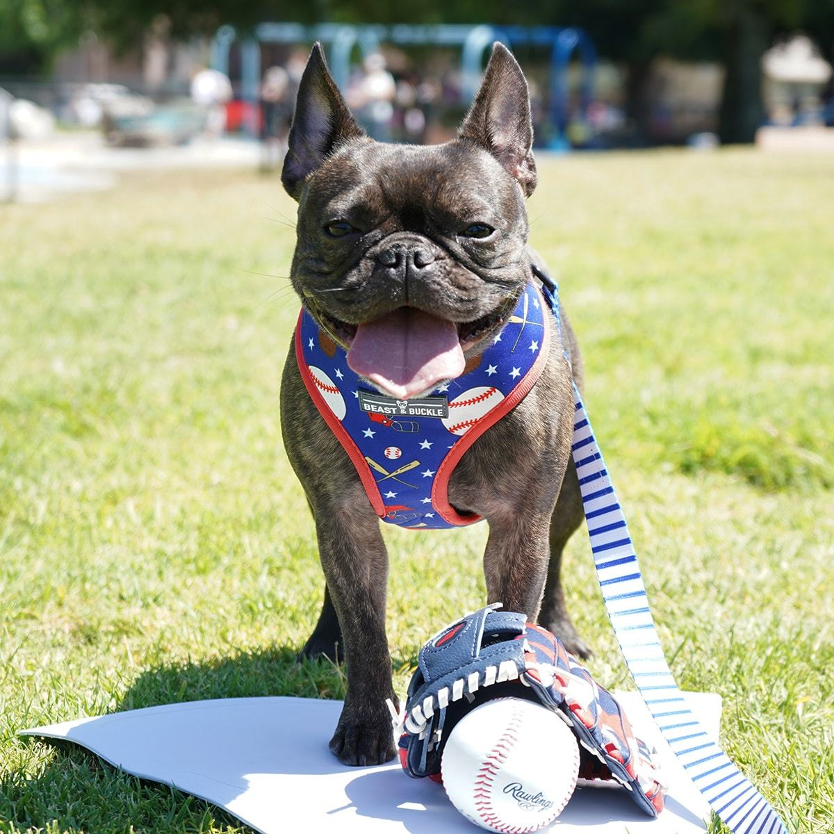 Baseball Harness and Leash Set - Beast & Buckle