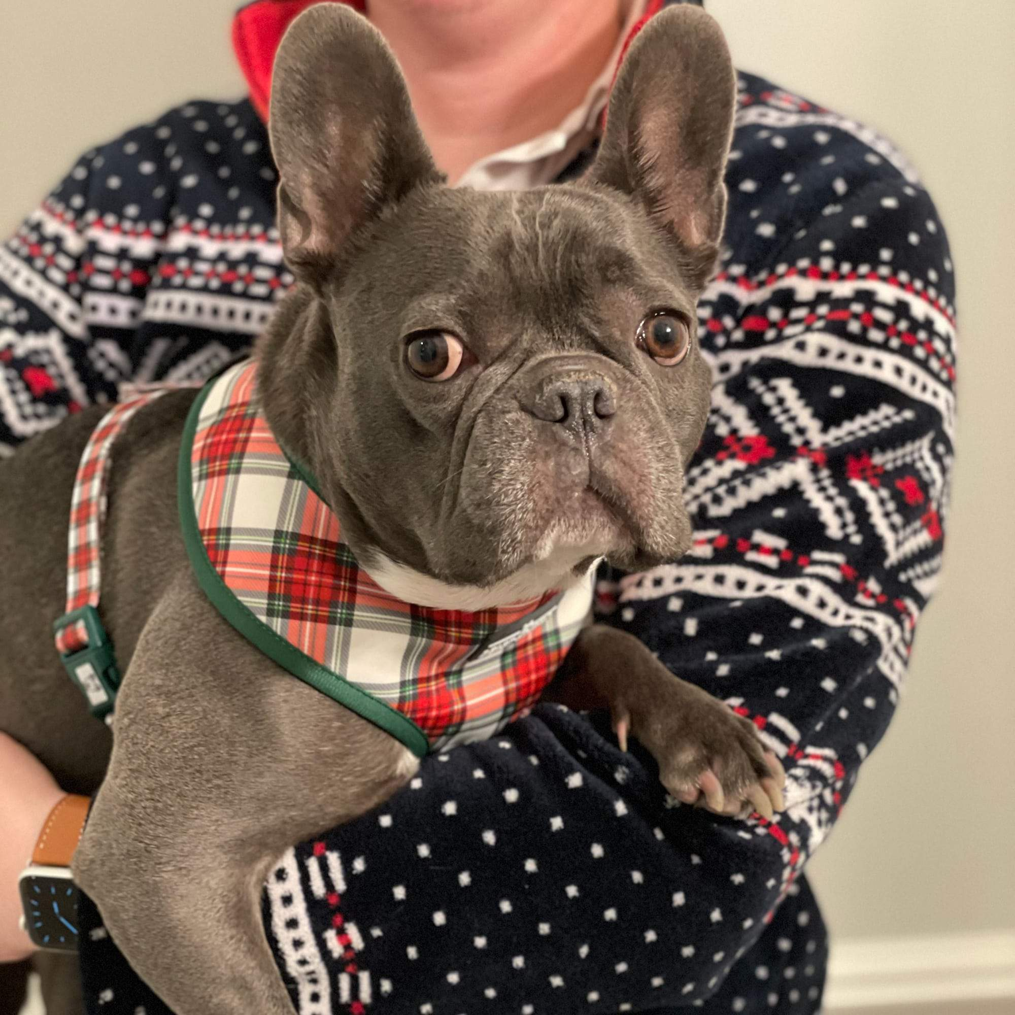 Christmas Plaid Classic Harness & Leash Set - Beast & Buckle