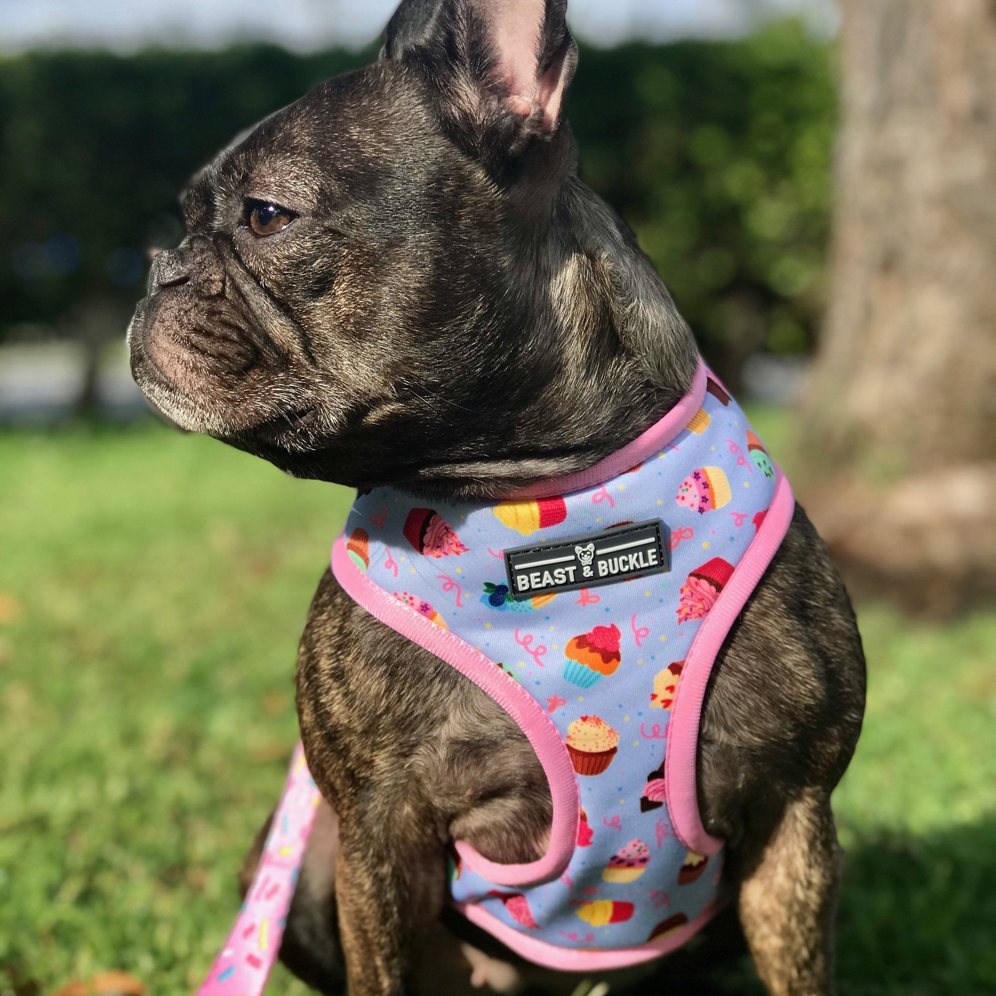 Cupcake Harness Collection Bundle