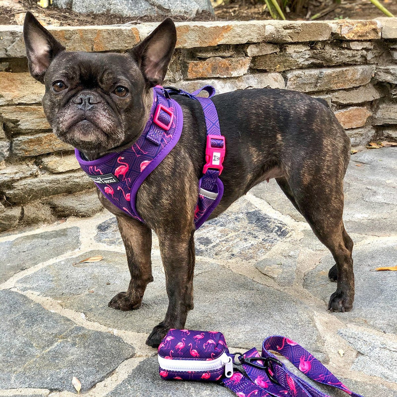Flamingo Adjustable Dog Harness - Beast & Buckle