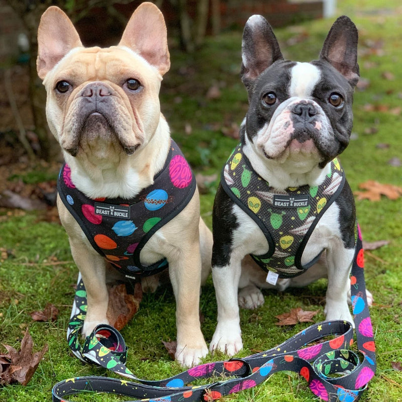 Outer Space Reversible Dog Harness - Beast & Buckle