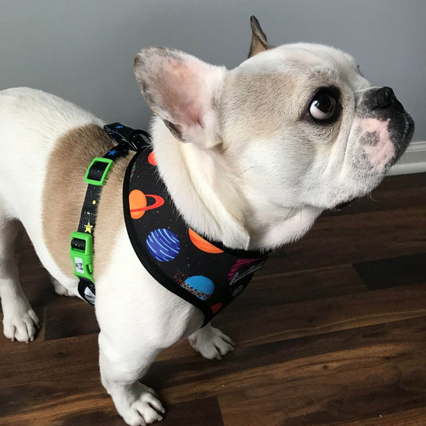 Outer Space Reversible Dog Harness 1