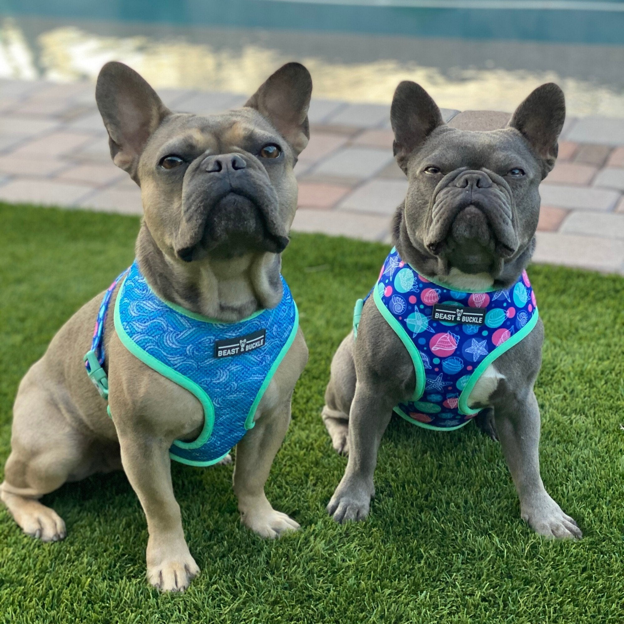 Seashell Harness and Leash Set - Beast & Buckle