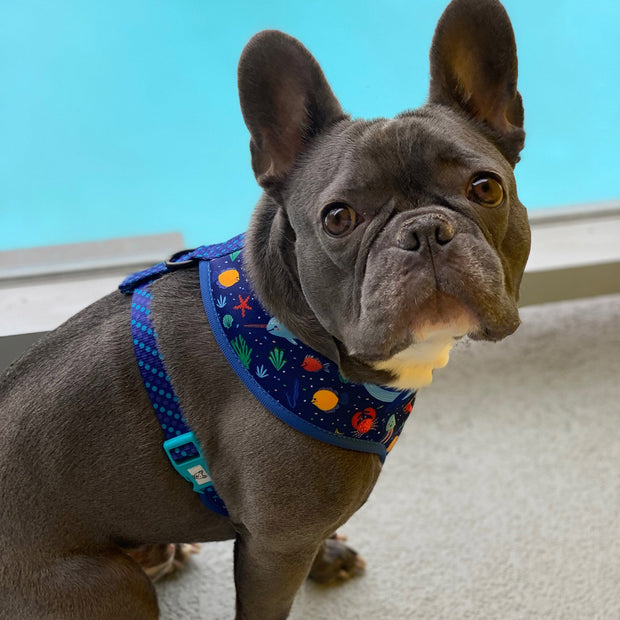 Under the Sea Classic Dog Harness 1