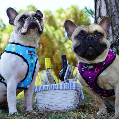 Wine Reversible Dog Harness - Beast & Buckle