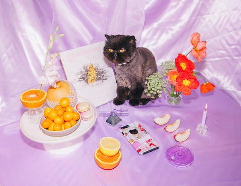 A Self-Care Editorial with Muad'dib The Cat