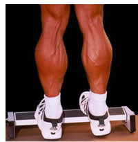 Load image into Gallery viewer, Extreme Calf Machine I