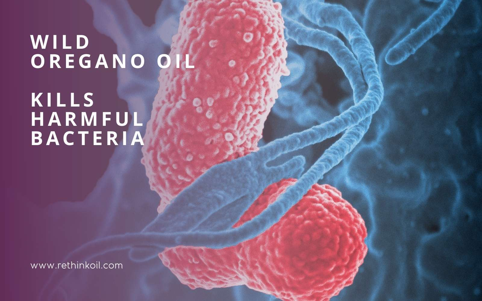 ReThinkOil Blog Wild Oregano Oil Kills Harmful Bacteria