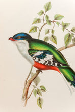 Load image into Gallery viewer, Cuba Trogon