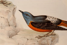 Load image into Gallery viewer, Rock Thrush