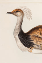 Load image into Gallery viewer, Ruffed Bustard