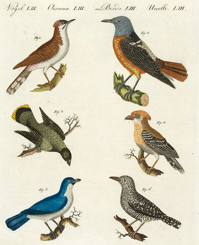 Pl LIII: assorted birds