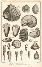 Load image into Gallery viewer, Histoire Naturelle, Regne Minéral (Fossils and Minerals
