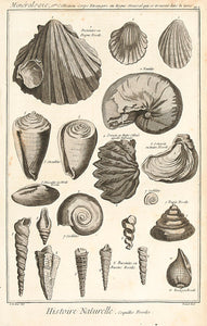 Histoire Naturelle, Regne Minéral (Fossils and Minerals