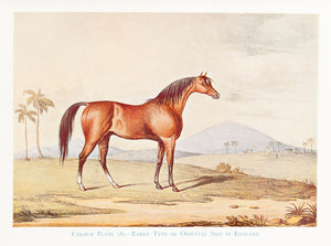 Thoroughbred Racing Stock and its Ancestors. The Authentic Origin of Pure