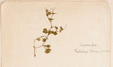 Load image into Gallery viewer, Botanical Album with Original Illustrations of Flowers