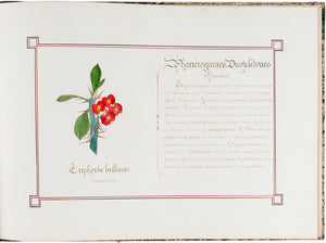 Botanical Album with Original Illustrations of Flowers