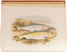 Load image into Gallery viewer, British Freshwater Fishes