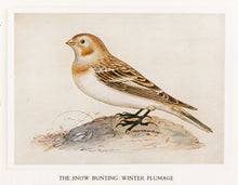 Load image into Gallery viewer, The Water Colour Drawings Of Thomas Bewick