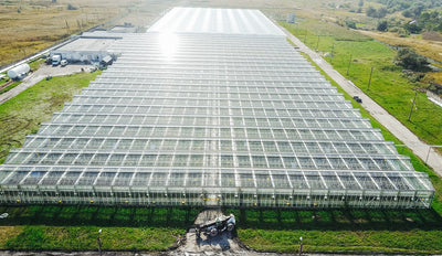 Permanent Lighting Solutions for Greenhouses, Clone Nurseries and Veg Rooms