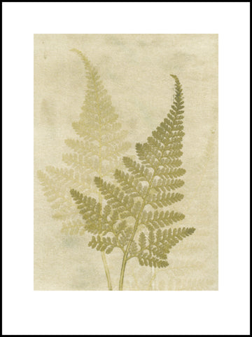 Fern. olive. 30x40. Limited edition