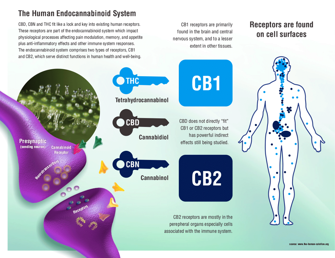 CBD Myths & Misconceptions