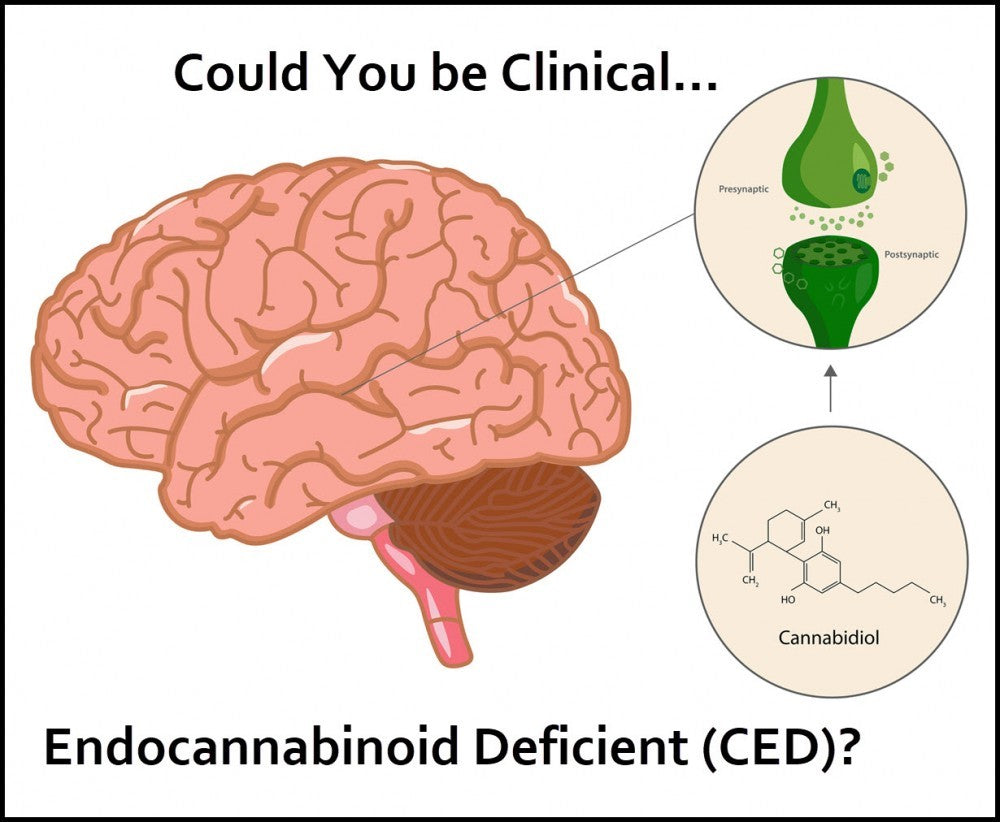 Could You be Clinical Endocannabinoid Deficient (CED)?