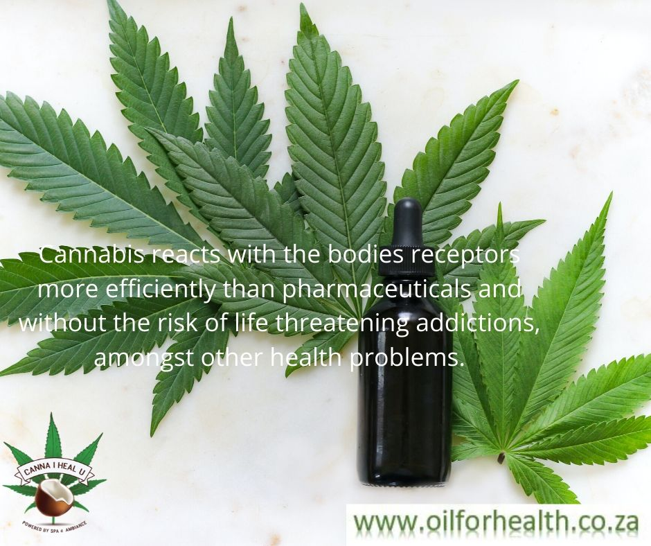 Cannabis reacts with the bodies receptors