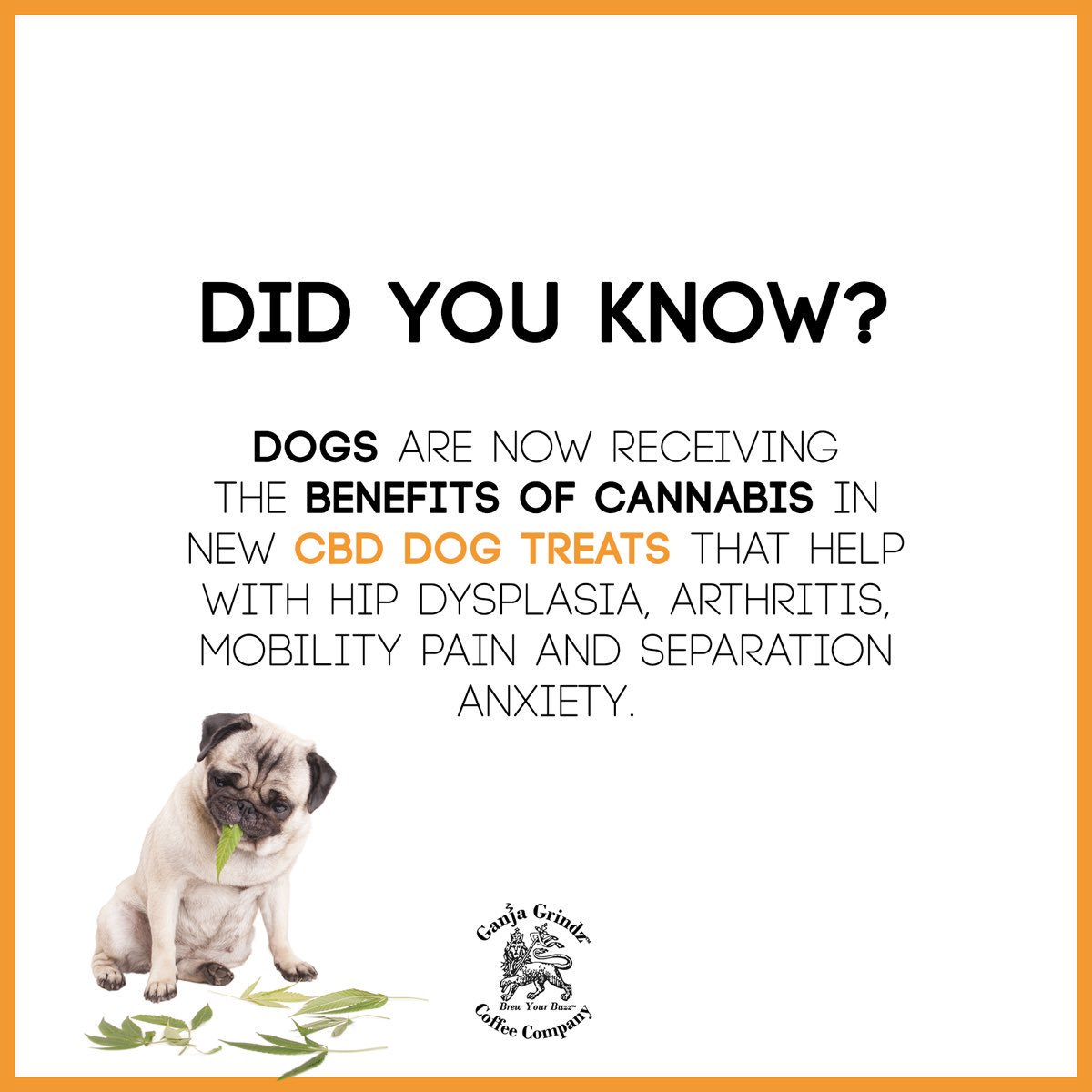CBD Oil for Dogs: Can Cannabis Benefit Your Furry Friend?