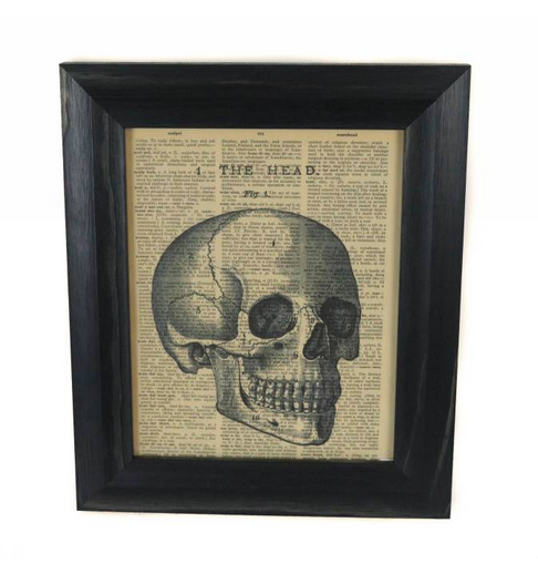 Skull Picture