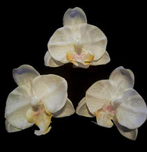 Load image into Gallery viewer, Small White Tropical Orchid Hair Flower Set of 3