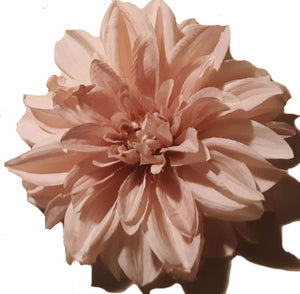 Light Pale Pink Dahlia Hair Flower