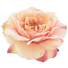 Load image into Gallery viewer, Luxe Peach Pink Open Rose Hair Flower Clip