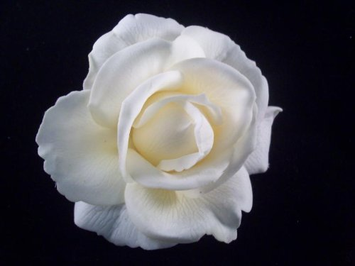 Ivory White Wedding Rose Real Touch Flower Hair Clip