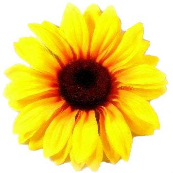 Sunflower Hair Clip 4.5  Inches