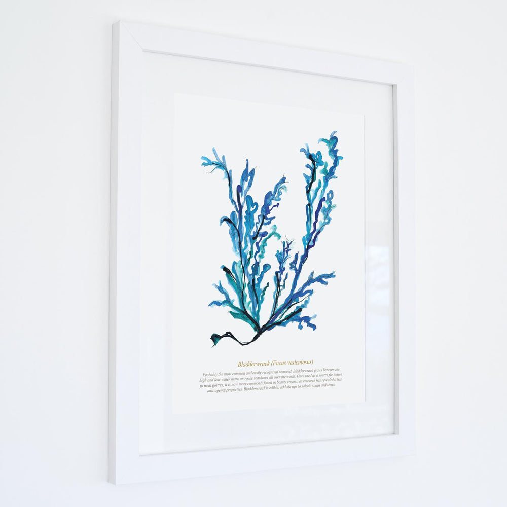 BLADDERWRACK WATERCOLOUR PRINT - FRAMED
