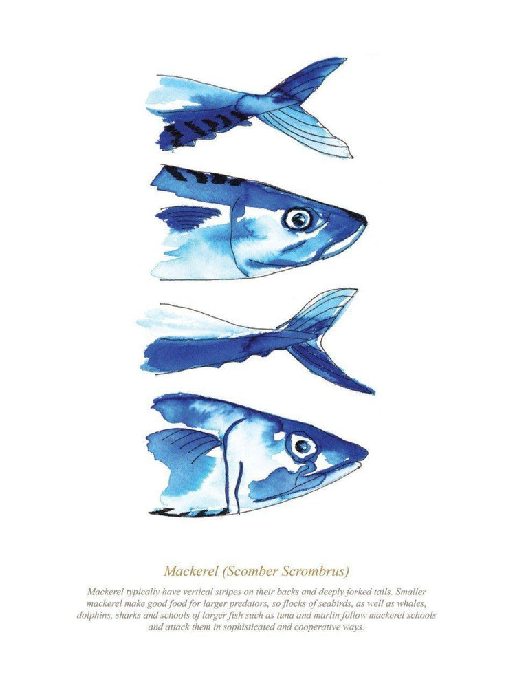 MACKEREL PRINT - FRAMED