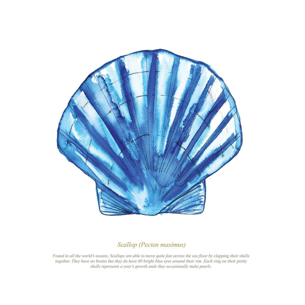 SCALLOP WATERCOLOUR PRINT - FRAMED