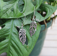 Load image into Gallery viewer, Silver monstera adansonii dangle earrings are shown hanging from a real plant by the same name. They are made by The Striped Cat Metalworks.