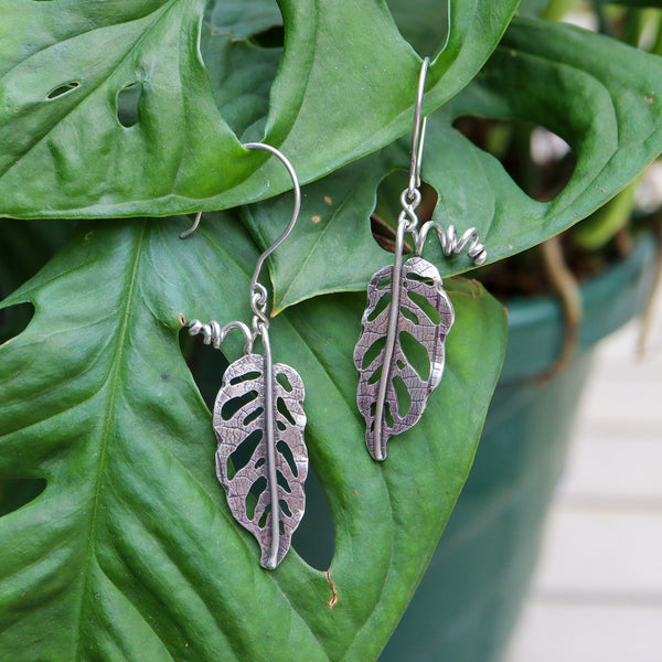 Handmade sterling silver monstera adansonii dangle earrings. They are shown hanging on a real plant of the same kind.