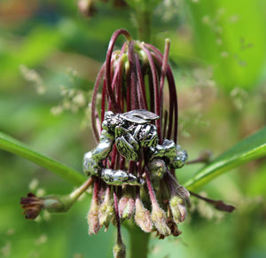 The Striped Cat Metalworks honeybee ring made from sterling silver photographed on a cluster of milkweed flowers