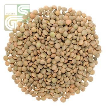 Brown Lentils 8 Lbs-Golden Supplies Ltd