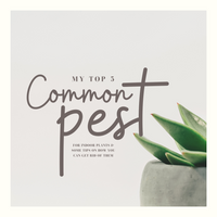 My Top 5 Common Pests for Indoor Plants